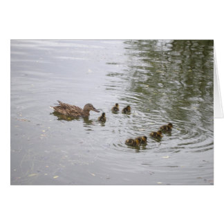 Duck and ducklings Card