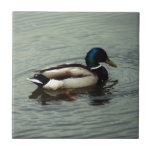 Duck at the Water Small Square Tile