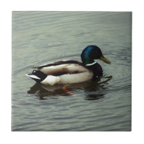 Duck at the Water Tile