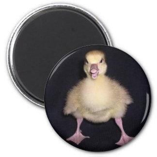 Duck Attitude 2 Inch Round Magnet