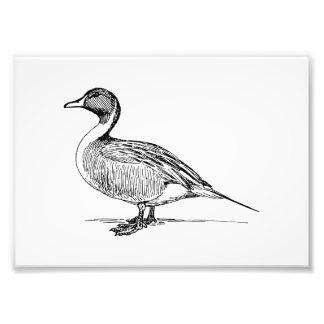 Duck Bird Art Photograph