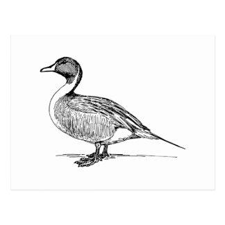 Duck Bird Art Postcard