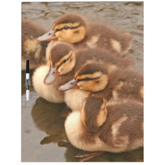 Duck Birds Animals Wildlife Photography Dry Erase Board