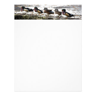 Duck Birds Animals Wildlife Photography Letterhead