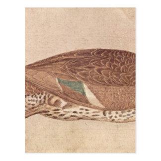 Duck by Pisanello Postcard