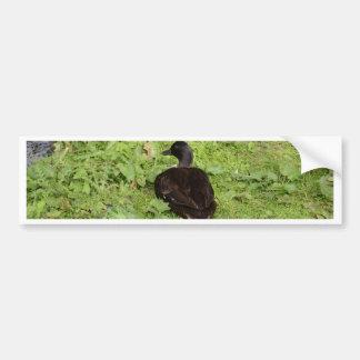 Duck By The Pond Bumper Sticker