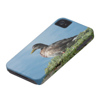 Duck by the Water Blackberry Bold Case
