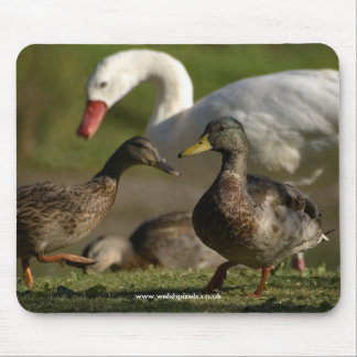 Duck Convention Mouse Pad