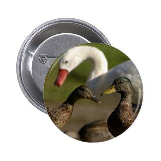 Duck Convention Pinback Button