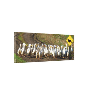 Duck crossing traffic sign stretched canvas prints