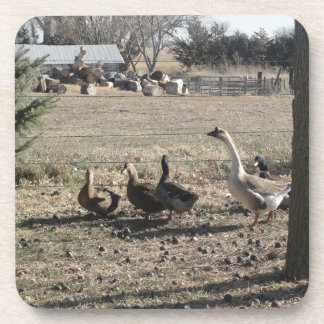 Duck Duck Goose Coaster