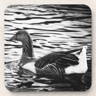 Duck en una charca en negro y blanco posavaso