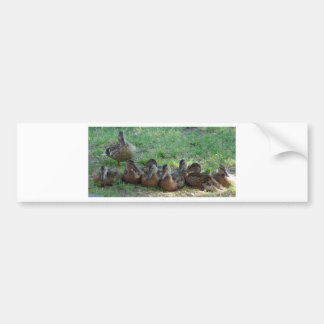 Duck family bumper sticker