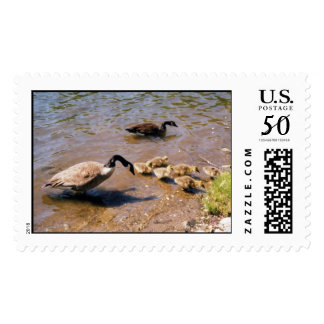 duck family postage