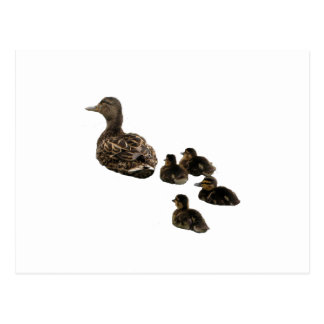 Duck Family Postcard