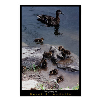 Duck Family Poster