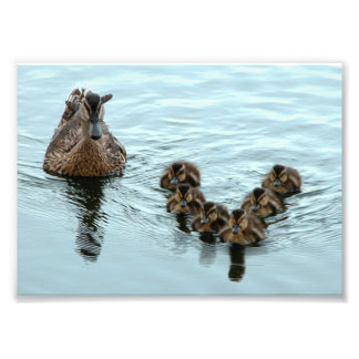Duck Formation Photo Print