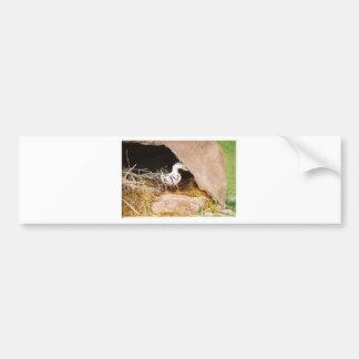 Duck Guarding Cave Bumper Sticker