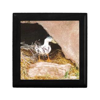 Duck Guarding Cave Jewelry Box