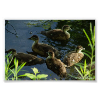 Duck Hide-out Print