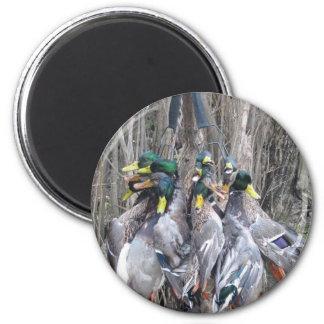 Duck Hunting mallard limit Magnet