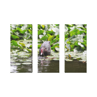 Duck in a Pond Stretched Canvas Print