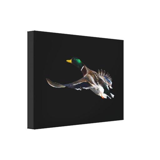 duck in flight canvas prints