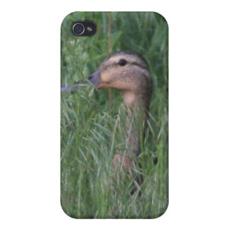 Duck in Grass 4/4s Cases For iPhone 4