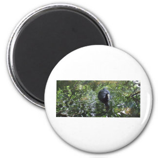 Duck In Green Soup 2 Inch Round Magnet