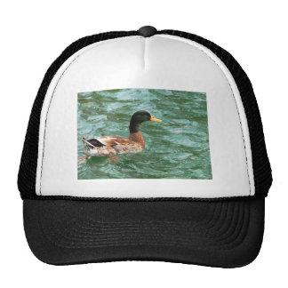 Duck in pond mesh hat
