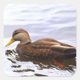 Duck in the Cove Sticker