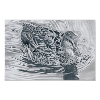 Duck in the river - pencil drawing poster