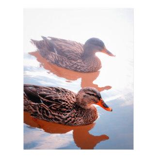 Duck Letterhead