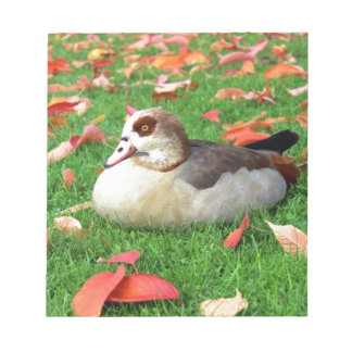 Duck lying in grass memo note pads
