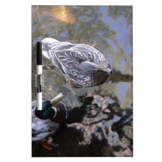 Duck (Male & Female) Dry Erase Whiteboards