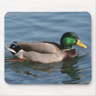 Duck Male Mallard Mouse Pad