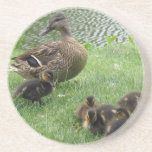 Duck mom and ducklings coaster