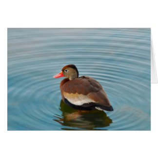 Duck Note Card (blank)