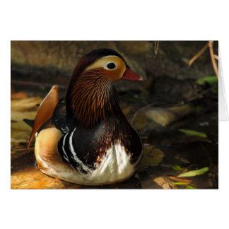 Duck Notecard
