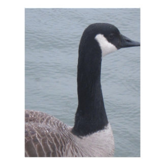Duck on a Lake Letterhead
