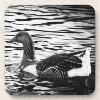 Duck on a Pond in black & white Beverage Coaster