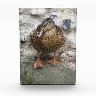 Duck on a Wall Decorative Acrylic Award