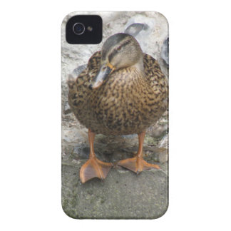 Duck on a Wall iPhone Case iPhone 4 Case-Mate Cases