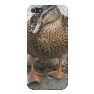 Duck on a Wall  iPhone 5 Cover