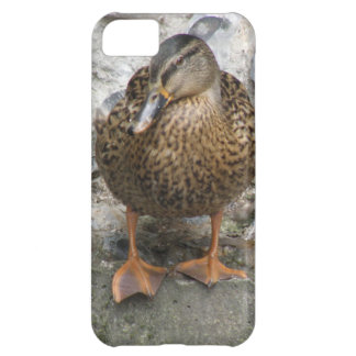 Duck on a Wall iPhone Case iPhone 5C Cases