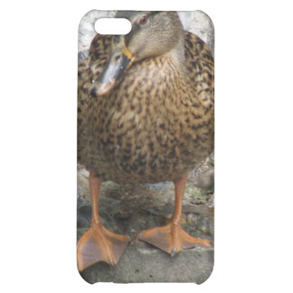Duck on a Wall  Case For iPhone 5C