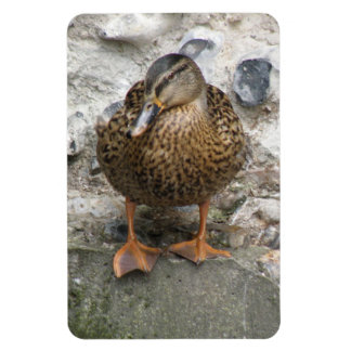 Duck on a Wall Premium Magnet