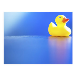 Duck on Blue Postcard