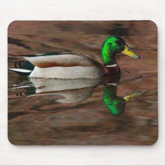 Duck on the Colorado River Mouse Pad