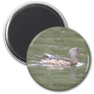 Duck on the Lake Magnet